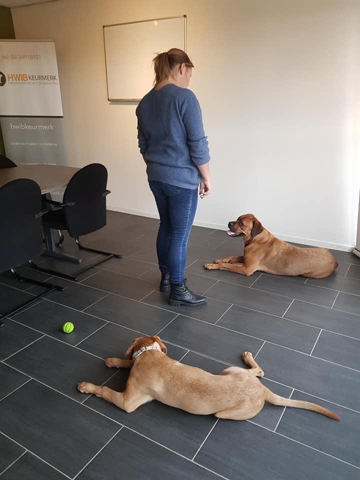 Werken met honden
